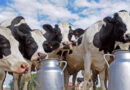 Private sector requested to give priority to produce liquid milk and milk powder
