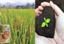 Mahaweli cultivations promotional week commences